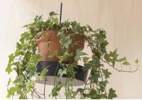 Support plante L55 cm